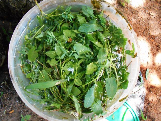 жидкие зеленые удобрения