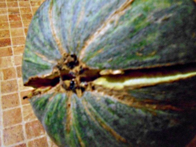 спелость арбуза и хвостик