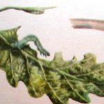 зимняя пяденица гусеница