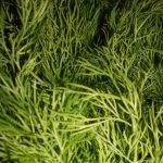 Влияние внешних условий на однолетние листовые овощные растения