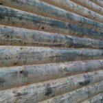грибок в деревянном доме