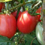 Признаки дефицита калия у растений