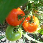 агротехника в огороде