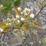 цветущие молодые деревья