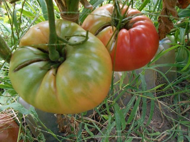земля для томата