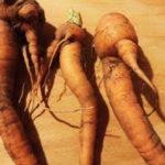 морковь выросла корявая