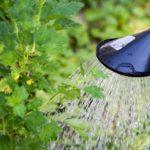 полив огорода холодной водой