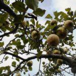 удобрения для роста деревьев