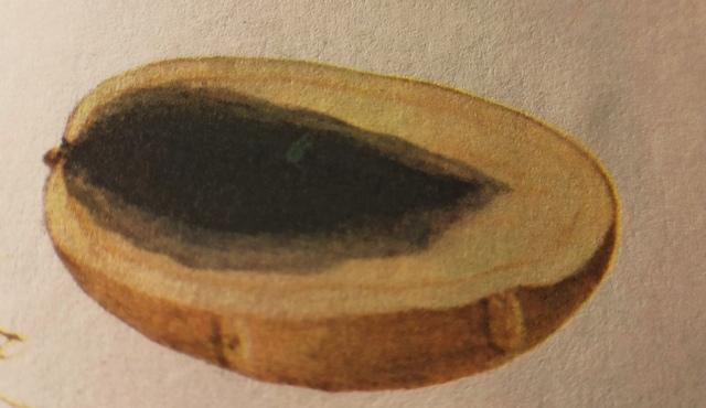 болезнь черная ножка у картофеля