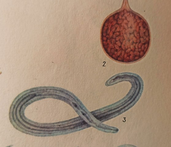 нематоды паразиты растений