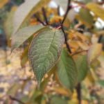 признаки недостатка азота и фосфора
