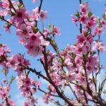 корневая система плодового дерева