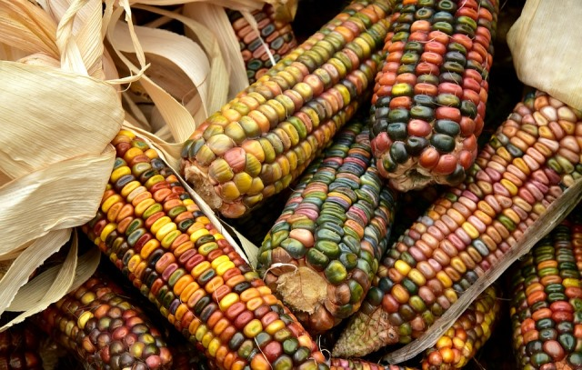 Интересные факты про «царицу полей» кукурузу