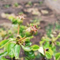 Признаки недостатка меди, цинка и молибдена у растений