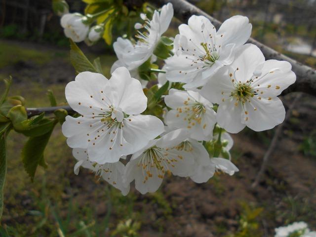 Чем можно подкормить плодовые деревья