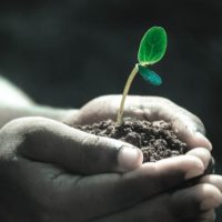 буферность почвы