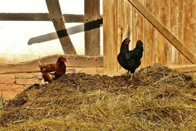 Органические удобрения для огорода: список и нормы внесения