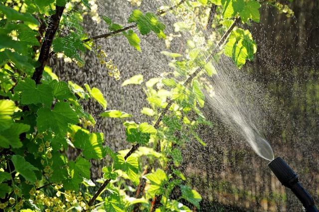 Организация качественного полива и защиты от вредителей на дачном участке