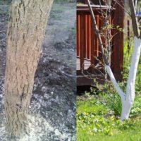 "<span class=""title"">Смесь для побелки деревьев осенью</span>"