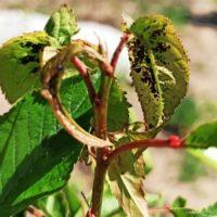 """<span class=""""title"""">Препараты из растений, оказывающих токсичное действие на вредные организмы в саду</span>"""